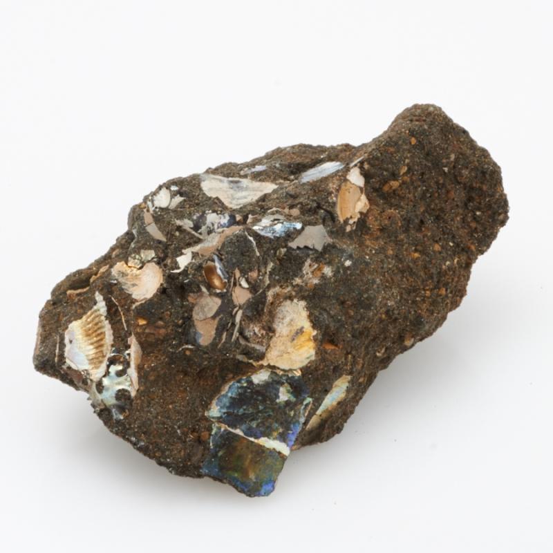 Окаменелость аммониты, фосфоритовый песчаник  S