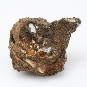 Окаменелость аммонит, фосфоритовый песчаник Россия S
