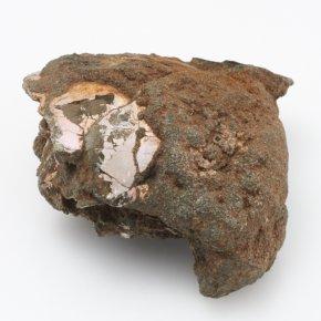 окаменелое дерево камень с отпечатком листьев цена