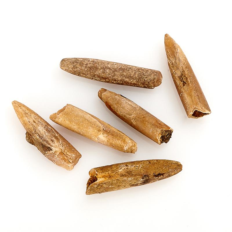 Окаменелость ростр белемнита  (3-4 см) 1 шт