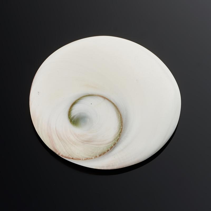 Кабошон окаменелая морская раковина  28 мм