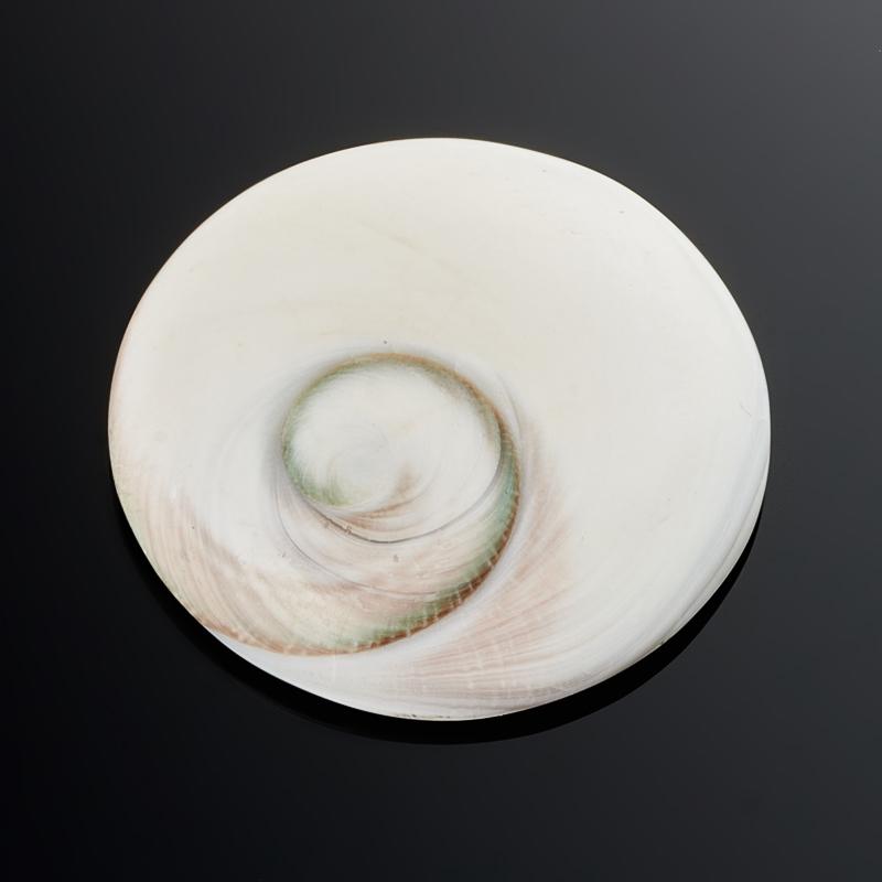 Кабошон окаменелая морская раковина  29 мм