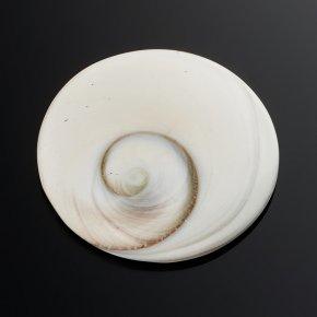 Кабошон окаменелая морская раковина Мадагаскар 30 мм