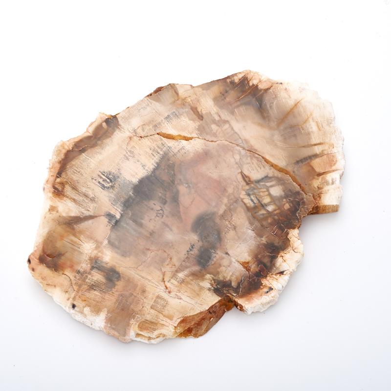 Окаменелое дерево  L