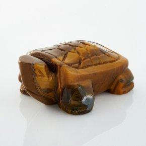 Черепаха тигровый глаз ЮАР 5 см