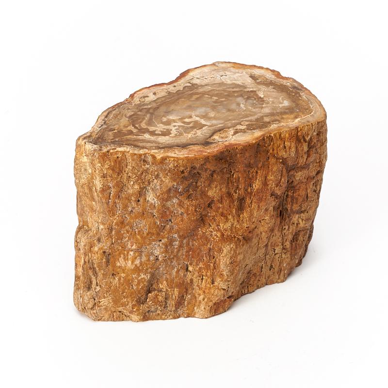 Окаменелое дерево S окаменелое дерево xs