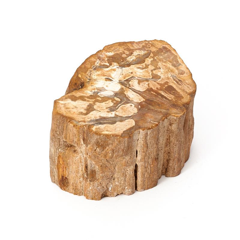 Фото - Окаменелое дерево S окаменелость окаменелое дерево опализированное l