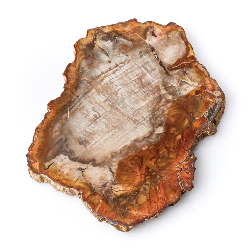 цена на Окаменелое дерево М