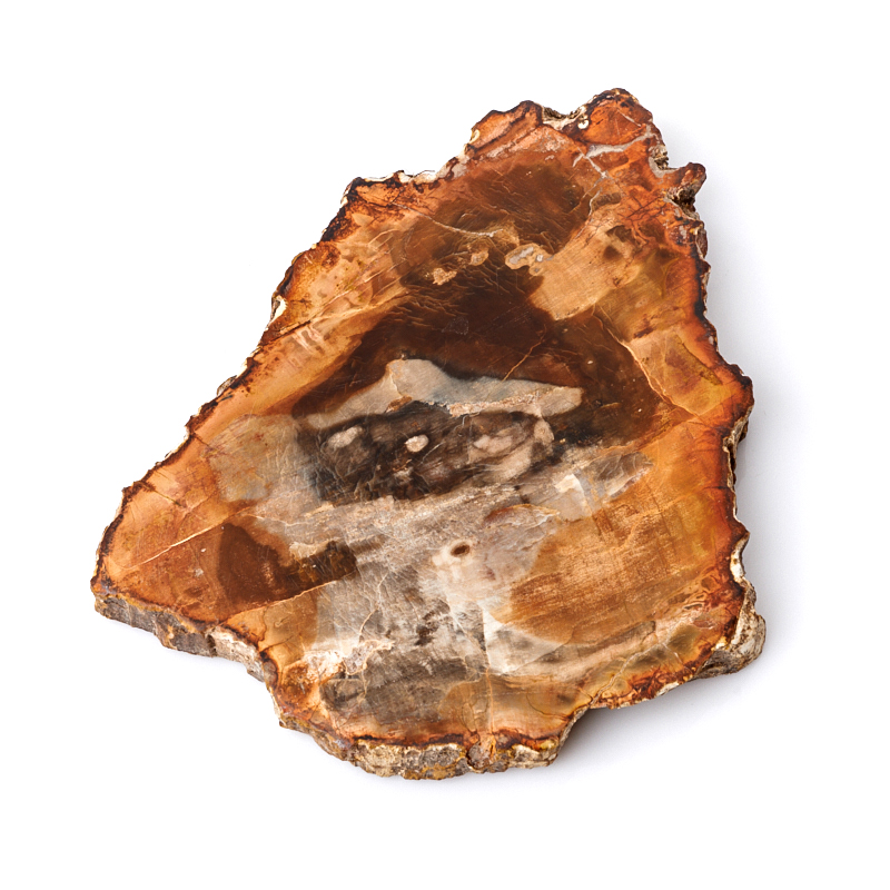 Окаменелое дерево М