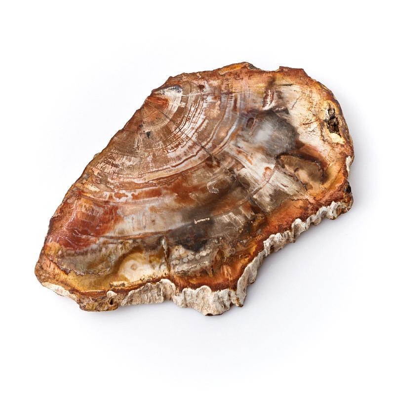 Фото - Окаменелое дерево М окаменелость окаменелое дерево опализированное l