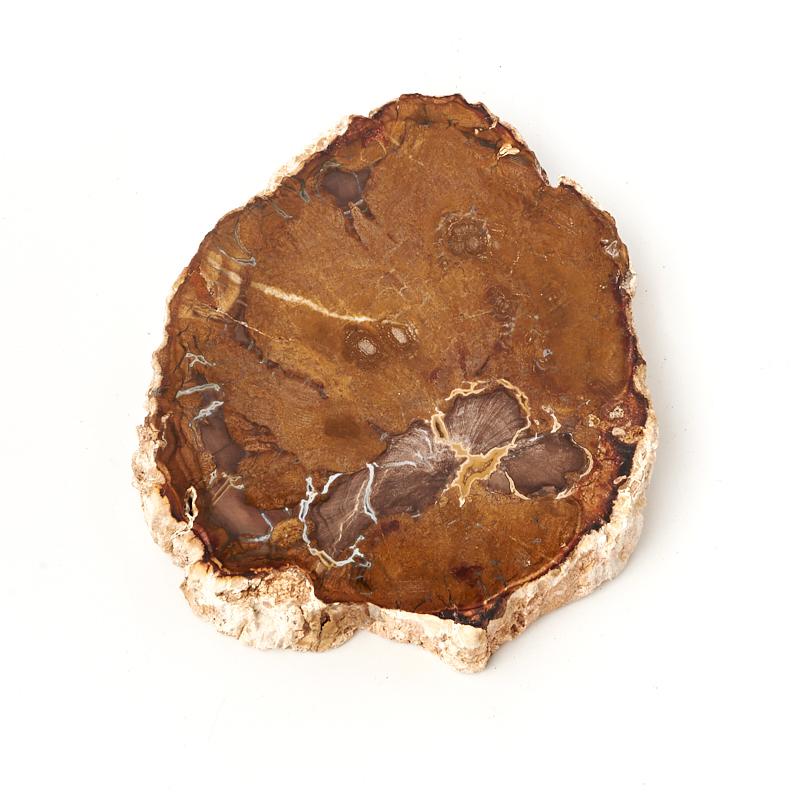 Окаменелость окаменелое дерево  M