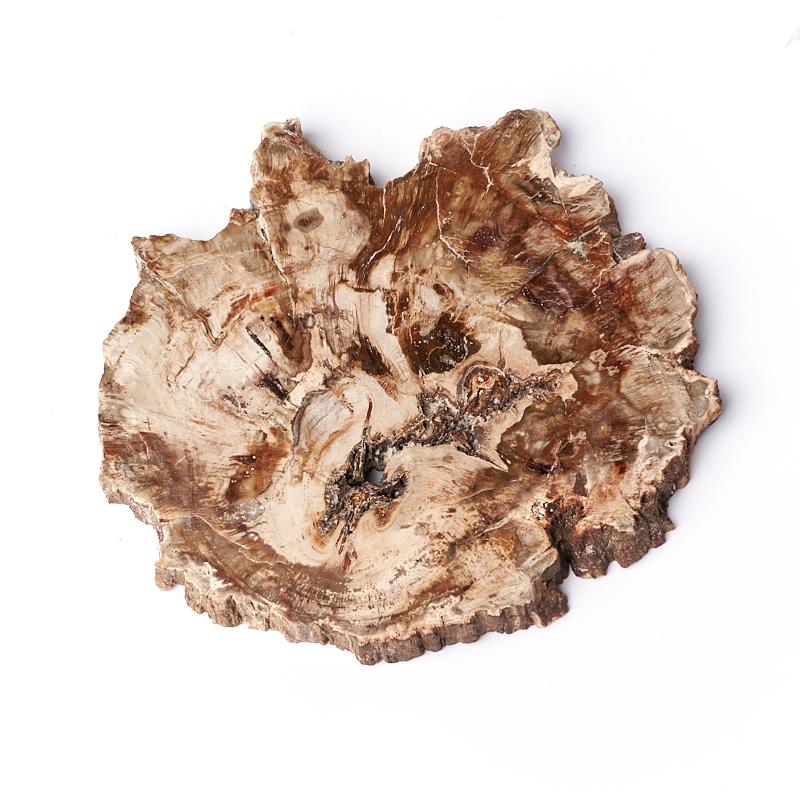 Окаменелость окаменелое дерево  L (12-16 см)