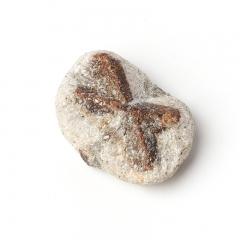 Образец ставролит Россия XS (3-4 см) (1 шт)