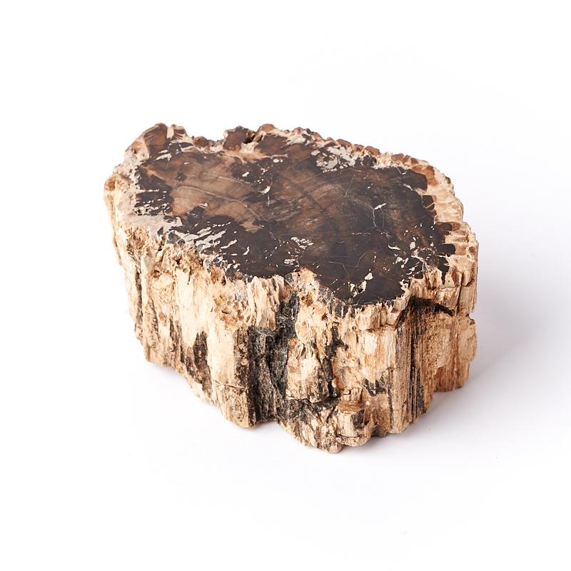 Окаменелость окаменелое дерево  M (7-12 см)