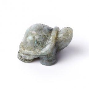 Черепаха лабрадор Бразилия 4 см