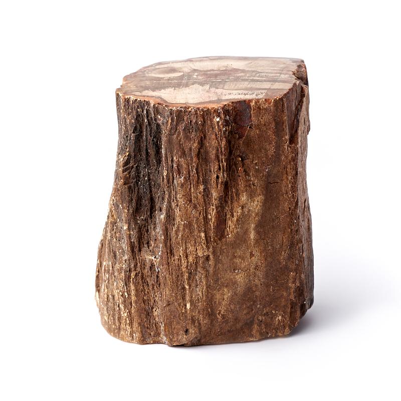 Окаменелость окаменелое дерево  S (4-7 см)