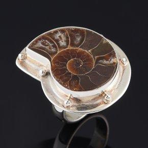 Кольцо окаменелость Мадагаскар (серебро 925 пр.) (регулируемый) размер 17,5
