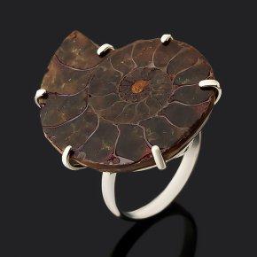 Кольцо аммониты Мадагаскар (нейзильбер) размер 18