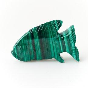 Рыба малахит Конго 6,5 см