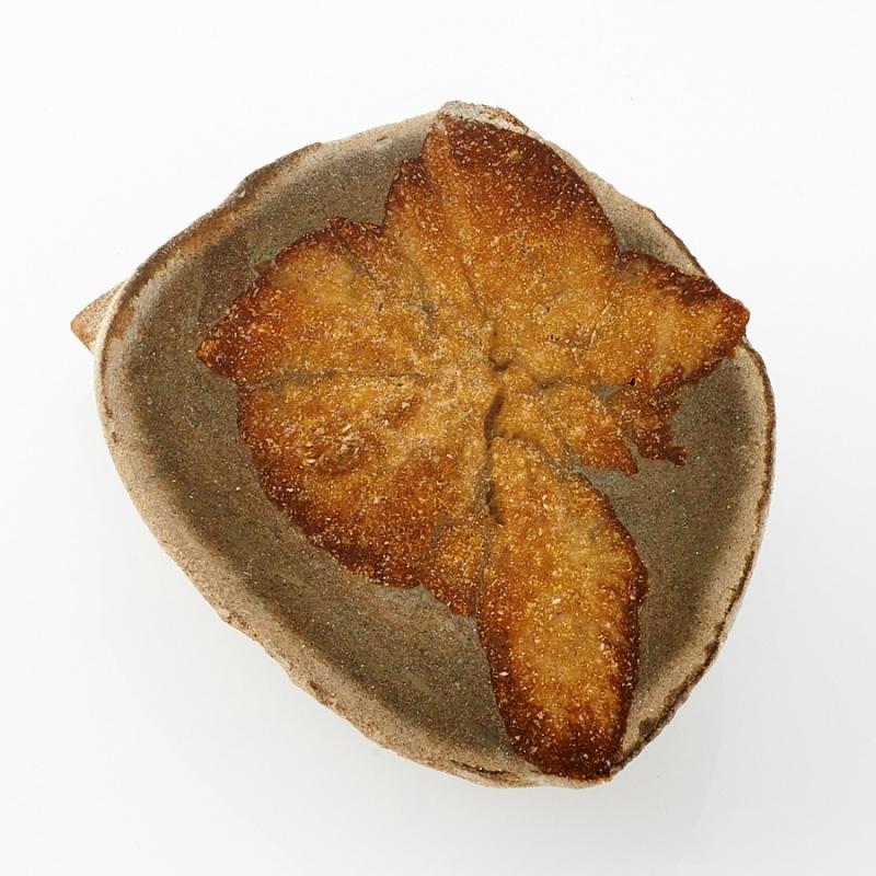 Глендонит (беломорская рогулька) Кольский п-ов  р.Оленица
