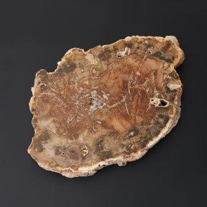 Окаменелость окаменелое дерево Мадагаскар M (7-12 см)