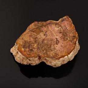 Окаменелость окаменелое дерево Мадагаскар S (4-7 см)