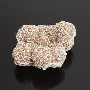 Образец пустынная роза Мексика M (7-12 см)