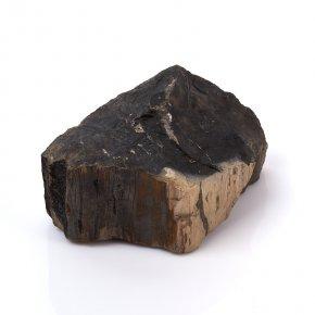 Окаменелость окаменелое дерево Россия L (12-16 см)