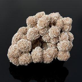 Образец пустынная роза Мексика L (12-16 см)